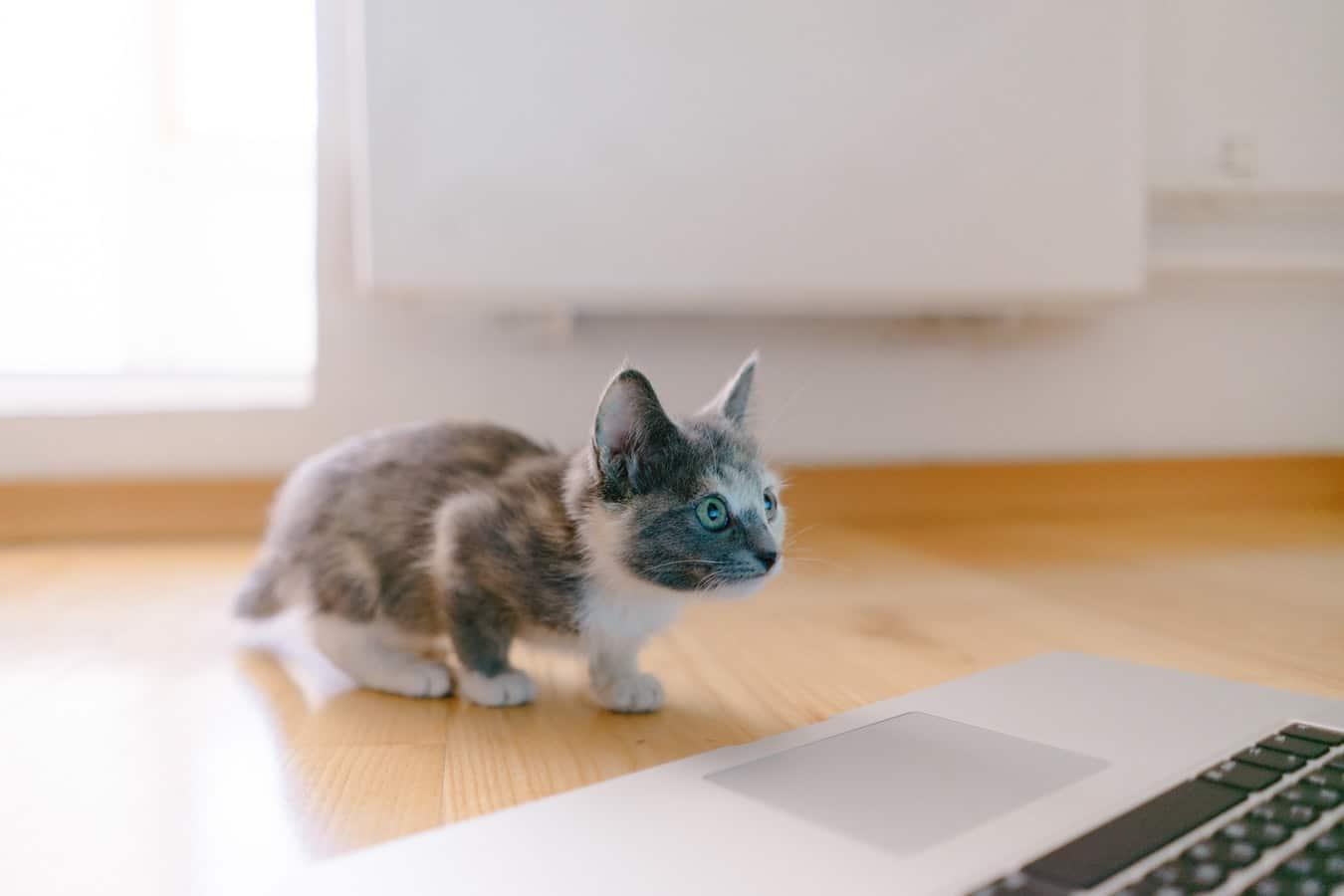 Im Social Intranet Cat Content teilen? Wie Sie den Arbeitsalltag spannender gestalten